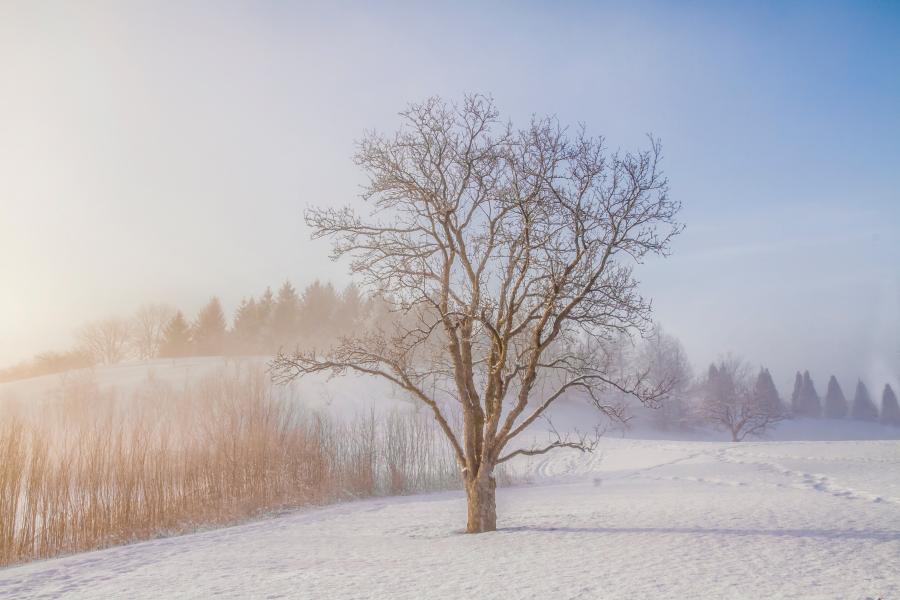 Foto af et snedækket landskab