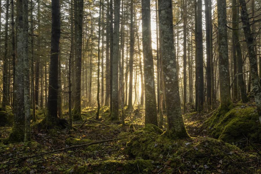Foto af en skov