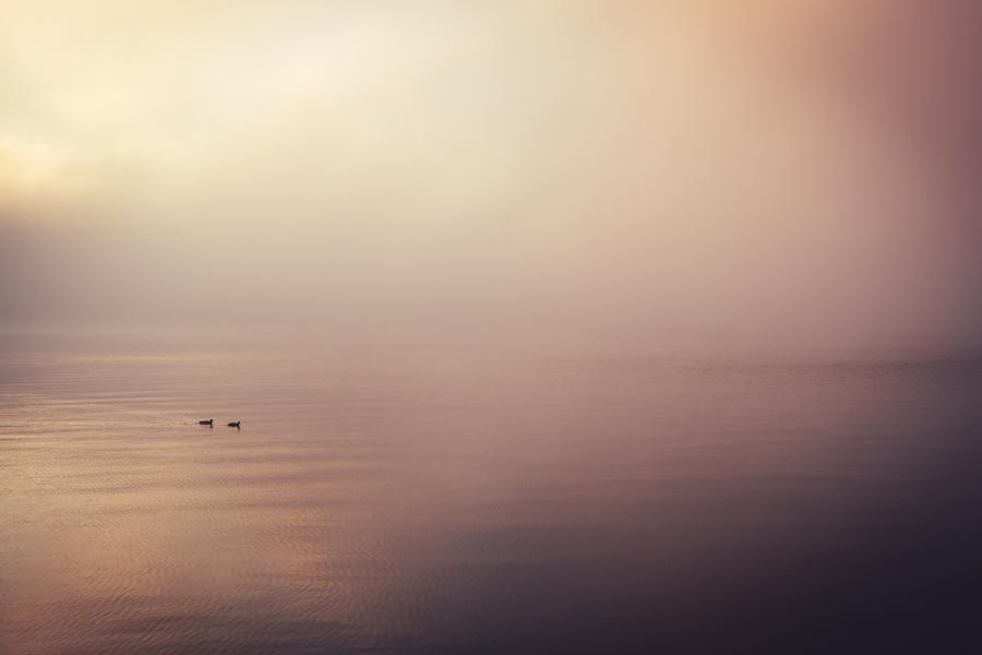 Vand med tåge og to ænder, Foto: Unsplash