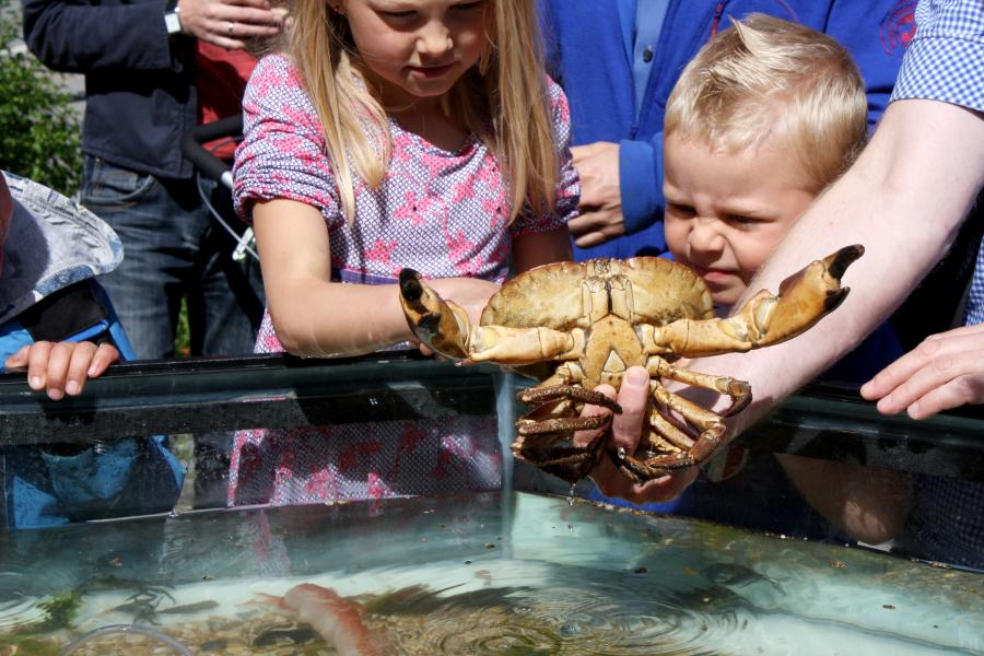 Foto: Trondheim Havn. Opgaverne i bingopladen fra bibliotekerne bringer jer forbi Helsingør Nordhavn, hvor I skal forsøge at finde krabber. Dette foto er fra Kystens Dag i Helsingør.
