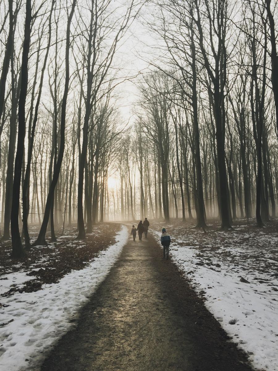 Foto af nogle der vandrer i en vinterskov