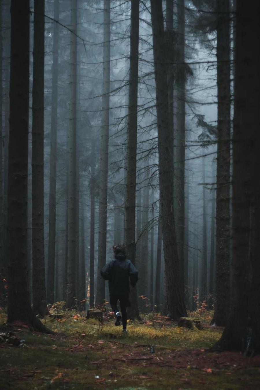 En person, der løber i en mørk og tåget granskov. Foto fra Unsplash